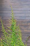 Background of wall wooden with green tree Royalty Free Stock Photos