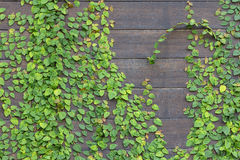 Background of wall wooden with green tree Royalty Free Stock Photography