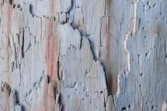 Macro shot wood. Background wallpaper,closeup old wood Stock Image