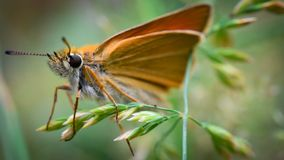 Macro shot butterfly. Background wallpaper,closeup portrait insect on leafs Royalty Free Stock Photography