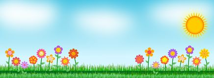 Background flower in the meadow Stock Image