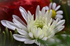 Macro shot small flower. Background wallpaper, flowers closeup. Summer compilation Royalty Free Stock Photos