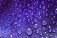 Macro shot flower leaf with waterdrops. Background wallpaper,leaf closeup  with water drops Stock Photos