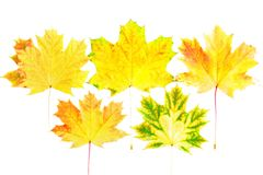 Background, wallpaper-perfect autumn leaf . Royalty Free Stock Photos