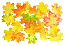 Background, wallpaper-perfect autumn leaf . Stock Photos