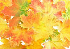 Background, wallpaper-perfect autumn leaf . Stock Image