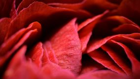 Macro shot small flower. Background wallpaper, rose closeup. abstraction Royalty Free Stock Image