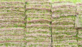 Background wallpaper - stacks of fresh green sod in a park. Background wallpaper - full frame of stacks of lush green sod waiting to be planted in springtime royalty free stock image