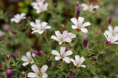 Macro shot small flower. Background wallpaper, white flower closeup Stock Image