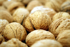 Background with walnuts Stock Image