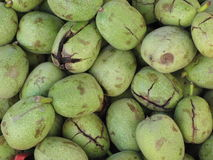 Background from walnuts green. Background from green walnuts with a skin Stock Photography