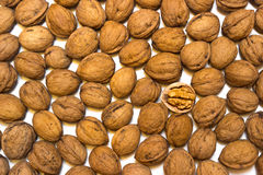 Background walnuts. A walnuts on a white background Stock Photography