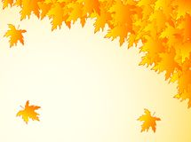 Background in warm colors with yellow maple leaves. Royalty Free Stock Photos