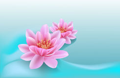 Background With Water Lilies Royalty Free Stock Images