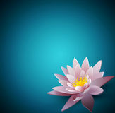 background with a water lily Royalty Free Stock Photo