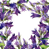 Background with watercolor drawing blue bell flowers Royalty Free Stock Images
