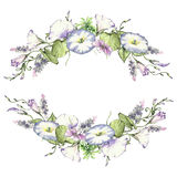 Background with watercolor drawing wild flowers, round floral frame, wreath with painted field plants, herbal border. Botanical illustration in vintage style Royalty Free Stock Image
