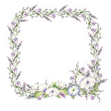 Background with watercolor drawing wild flowers, round floral frame, wreath with painted field plants, herbal border. Botanical illustration in vintage style Royalty Free Stock Photography