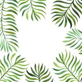 Background with watercolor fern leaves. Background with green watercolor fern leaves isolated at white background, hand drawn illustration Royalty Free Stock Image