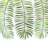 Background with watercolor fern leaves. Background with green watercolor fern leaves isolated at white background, hand drawn illustration Royalty Free Stock Photos