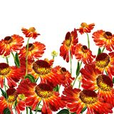 Flowers of rudbekia Royalty Free Stock Images