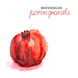 Background with watercolor pomegranate Royalty Free Stock Images
