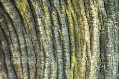 The background of weathered wood,Old wood texture.  Stock Photos