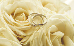 Background for wedding with rings lying on white roses Royalty Free Stock Photography