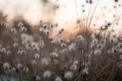Background with weeds and magic of light at twilight in the autumn. Sunset stock photography