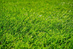 Background of wet green grass texture Royalty Free Stock Photography