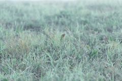 Background with wet morning grass, selective focus royalty free stock image