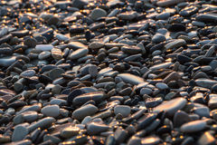 Background with wet shiny stones on the beach. Wet shiny stones on sunset on the beach. Close-up background texture stock photography