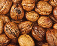 Background of wet walnuts Royalty Free Stock Photos