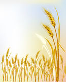 Background  with wheat. Vector Illustration Royalty Free Stock Photography