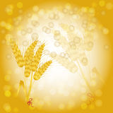 Background with wheat Stock Photography