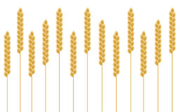 Background wheat cereal. Background with wheat cereal, vector Royalty Free Stock Images