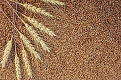Background of wheat ears lie on Golden wheat grains scattered on wooden table. Background of wheat lie on Golden wheat grains scattered on wooden table stock photos