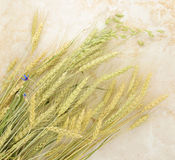 Background of wheat ears on a marble background Stock Image