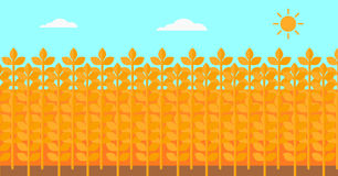 Background of wheat field. Royalty Free Stock Photos