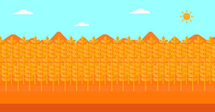 Background of wheat field. Stock Photos