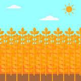 Background of wheat field. Royalty Free Stock Photo