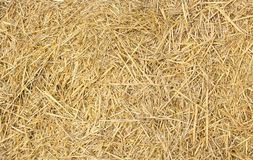Background of wheat hay Royalty Free Stock Images