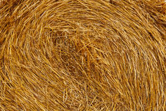 Background from wheat straw. In roll royalty free stock photos