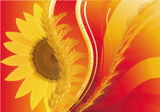 Background with wheat and a sunflower Stock Photography