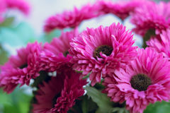 Background of white Artificial Daisy Flowers Royalty Free Stock Images