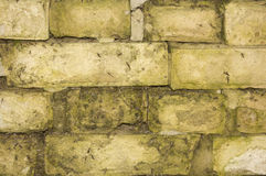 Background of white bricks with moss Stock Image