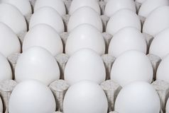 White chicken eggs in a tray. Background of white chicken eggs in a tray Royalty Free Stock Photo