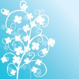 Background with white clovers Royalty Free Stock Photo