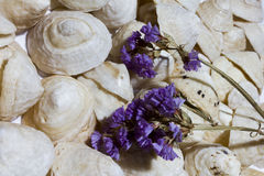 Background of white conical shells with a violet flower on the right side Stock Photos