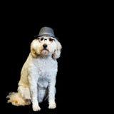 Background with White Dog Wearing Black-rim Glasses and Fedora Stock Image